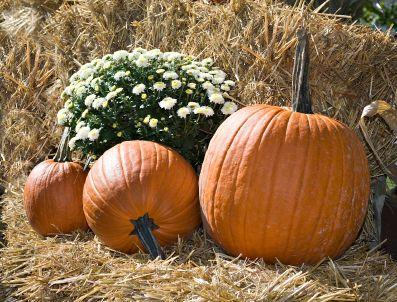 110265-397x302-Pumpkin_in_Straw